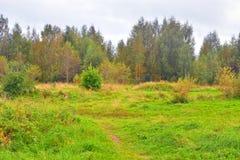Sommarlandskap med fältet Royaltyfri Fotografi
