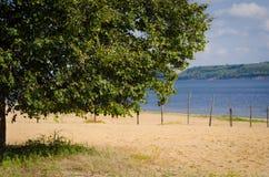 Sommarlandskap med floden och trädet Royaltyfria Bilder