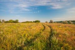 Sommarlandskap med grönt gräs Royaltyfria Bilder