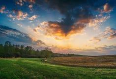 Sommarlandskap med grönt gräs, väg Royaltyfri Foto