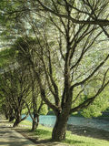 Sommarlandskap med härliga träd i parkera Arkivfoto