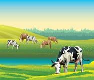 Sommarlandskap med kor och ängen Royaltyfria Bilder