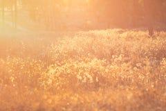 Sommarlandskap med linssignalljuset Royaltyfria Bilder