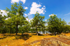 Sommarlandskap med sjön och ekar Arkivbilder