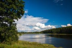 Sommarlandskap med skogen och sjön royaltyfri bild