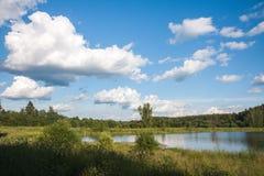 Sommarlandskap med skogen och sjön royaltyfria foton