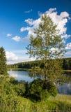 Sommarlandskap med skogen och sjön royaltyfri foto