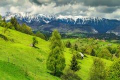 Sommarlandskap med snöig berg nära Brasov, Transylvania, Rumänien, Europa royaltyfri bild