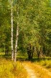 Sommarlandskap med vägen till skogen om den soliga dagen arkivbilder