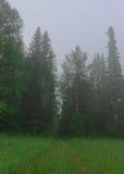 Sommarlandskap, morgon för skogmistträd Arkivfoto