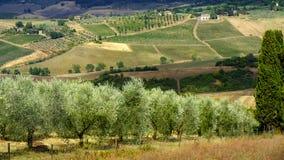 Sommarlandskap nära Montepulciano Royaltyfri Foto