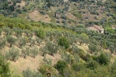 Sommarlandskap nära Volterra, Tuscany Arkivbilder