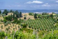 Sommarlandskap nära Volterra, Tuscany Arkivbild