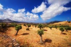 Sommarlandskap - Naxos ö, Grekland Arkivbilder