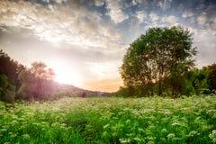 Sommarlandskap och härlig solnedgång Arkivfoton