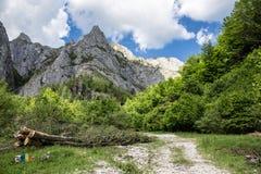 Sommarlandskap på berget Arkivbild