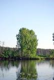 Sommarlandskap på den tysta sjön Arkivfoto