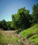 Sommarlandskap på ett damm Royaltyfria Bilder