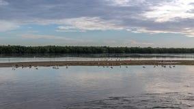 Sommarlandskap på J n Ding Darling National Wildlife fristad Arkivfoton