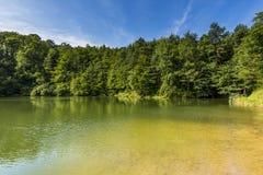 Sommarlandskap på sjön och skogen med spegelreflexion Arkivbild