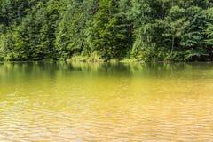 Sommarlandskap på sjön och skogen med spegelreflexion Arkivfoto