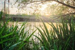 Sommarlandskap p? bankerna av floden royaltyfria foton
