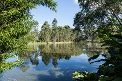 Sommarlandskap: träd på kust av sjön på solig dag Royaltyfri Foto