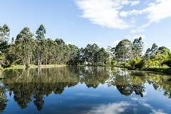 Sommarlandskap: träd på kust av sjön på solig dag Arkivbilder