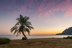 Sommarlandskapet med gömma i handflatan royaltyfri fotografi