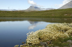 Sommarliggande i Island. fotografering för bildbyråer