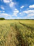 Sommarliggande med vetefältet och oklarheter Royaltyfri Fotografi