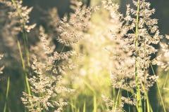 Sommarljus i gräs Arkivbilder