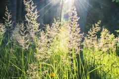 Sommarljus i gräs Royaltyfria Foton