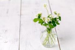 Sommarlynne med vit växt av släktet Trifolium på trätabellen Arkivbilder
