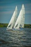 Sommarlynne: vit seglar mot den blåa himlen Royaltyfria Bilder