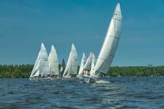 Sommarlynne: vit seglar mot den blåa himlen Arkivbilder