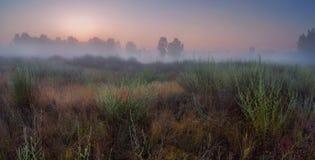 Sommarmorgon Fotografering för Bildbyråer