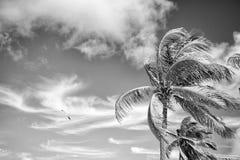 Sommarnaturplats kokosnötpalmträd med blå himmel Royaltyfri Fotografi