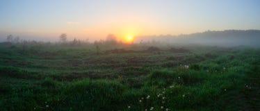 Sommarpanorama av den dimmiga ängen på soluppgång royaltyfria foton