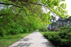 Sommarpark Arkivfoton