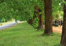 Sommarplats med gröna träd och gräs vid vägen fotografering för bildbyråer