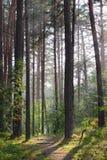 Sommarregn i en skog Royaltyfri Foto