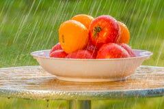Sommarregn och röda tomater Arkivfoto