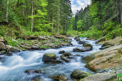 Sommarriverscape i Fagaras berg, Rumänien Arkivfoto