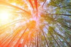 Sommars skog fotografering för bildbyråer