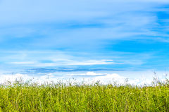 Sommarsikt med kopieringsutrymme Horisont av vassen mot blå himmel royaltyfri foto
