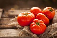 Sommarskörd av mogna saftiga tomater Royaltyfri Fotografi