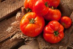 Sommarskörd av mogna saftiga tomater Royaltyfria Foton
