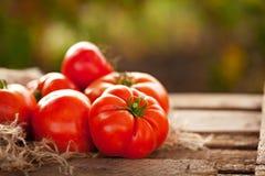 Sommarskörd av mogna saftiga tomater Arkivfoton