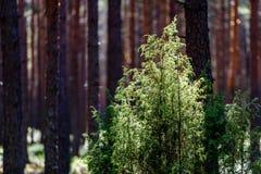 Sommarskogträd Gröna wood solljusbakgrunder för natur Royaltyfri Foto